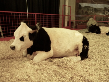 We got a look at some of the steers before they were auctioned off. They were huge.