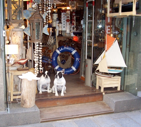French bulldogs at a shop in Saint Malo. July 2008