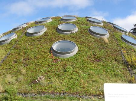The living roof of the California Academy of Science